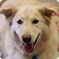 Adopt A Pet :: Katrina - Garland, TX
