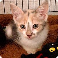 Adopt A Pet :: Rosemary - River Edge, NJ