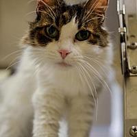 Adopt A Pet :: Susie - Herndon, VA