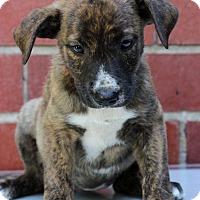 Adopt A Pet :: Eden - Waldorf, MD