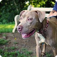 Adopt A Pet :: Bronx - Whitehall, PA