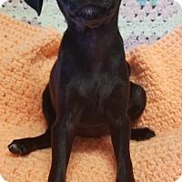 Adopt A Pet :: Ballerina - Los Angeles, CA