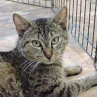 Adopt A Pet :: Tanya - Massapequa, NY