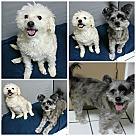 Adopt A Pet :: Polly & Charlie