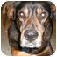 Photo 3 - Rottweiler/Hound (Unknown Type) Mix Dog for adoption in Raritan, New Jersey - Chino