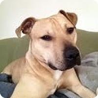 Adopt A Pet :: Damian - McKeesport, PA