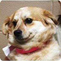 Adopt A Pet :: Sassy - Duluth, GA