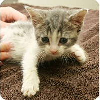 Adopt A Pet :: Parsley - Secaucus, NJ
