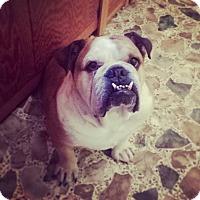 Adopt A Pet :: Max - Decatur, IL