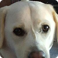 Adopt A Pet :: Charlie - Encinitas, CA