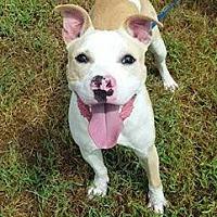 Adopt A Pet :: Casper - Hopewell, VA