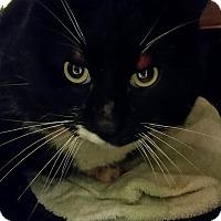 Adopt A Pet :: Barn Cat 2 - Hinton, AB