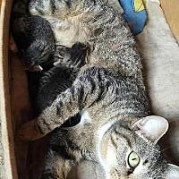 Adopt A Pet :: April - Hartford City, IN
