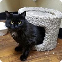 Adopt A Pet :: Belinda - Trenton, NJ