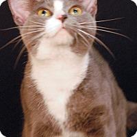 Adopt A Pet :: Francis - Newland, NC