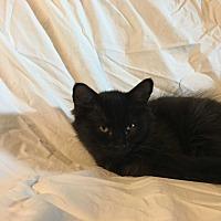 Adopt A Pet :: Whispers - Parkton, NC