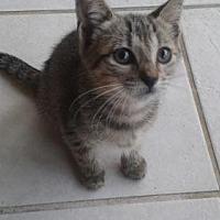 Adopt A Pet :: Ron - Palm Beach, FL
