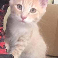 Adopt A Pet :: Sunshine - Fullerton, CA