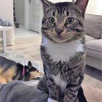 Adopt A Pet :: Steven - Saskatoon, SK