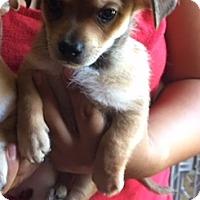 Adopt A Pet :: Duncan - Temecula, CA