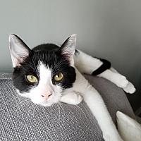 Adopt A Pet :: Argo - Toronto, ON