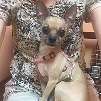 Adopt A Pet :: Carmella - Essington, PA