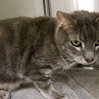 Adopt A Pet :: Sullivan - Queenstown, MD