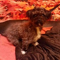 Adopt A Pet :: *SHRIMP - Upper Marlboro, MD