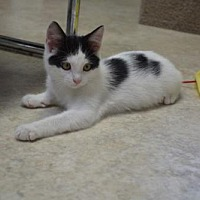 Adopt A Pet :: Smith - Sterling, MA