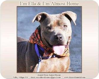 American Pit Bull Terrier Dog for adoption in Los Angeles, California - Ella (Good Girl)