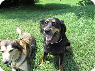 Spaniel (Unknown Type) Mix Dog for adoption in Nashville, Tennessee - Nainoa