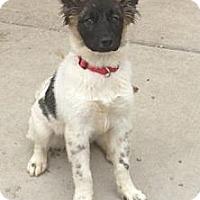 Adopt A Pet :: Keetah - Lancaster, OH