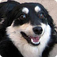 Adopt A Pet :: Fritz - Oakley, CA