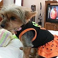Adopt A Pet :: Katie - Visa, CA