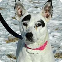 Adopt A Pet :: Piper - Cheyenne, WY