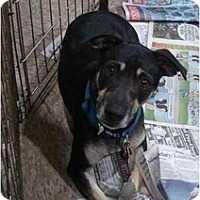 Adopt A Pet :: Maxx - Fowler, CA