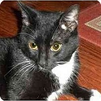 Adopt A Pet :: Sheldon - Montgomery, IL