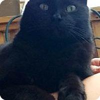 Adopt A Pet :: Charlie - Colorado Springs, CO