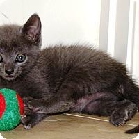 Adopt A Pet :: Abby - Nolensville, TN