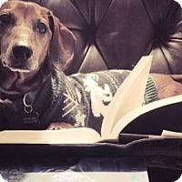 Adopt A Pet :: Neville - Georgetown, KY