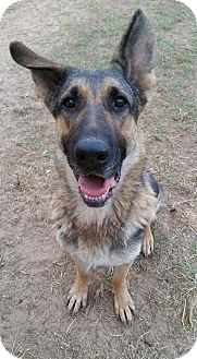 German Shepherd Dog Dog for adoption in Fort Valley, Georgia - Maggie