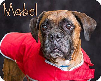 Boxer Mix Dog for adoption in Somerset, Pennsylvania - Mabel