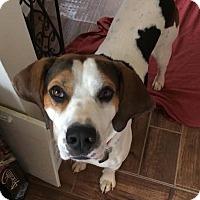 Adopt A Pet :: Hootie - North Brunswick, NJ