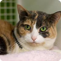 Adopt A Pet :: Augustine - Troy, MI