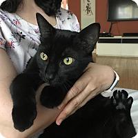 Adopt A Pet :: Shadow - Berkeley Hts, NJ