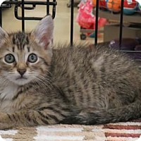 Adopt A Pet :: .Popcorn - Ellicott City, MD