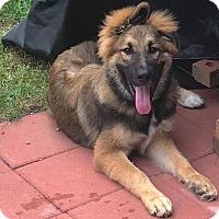 Adopt A Pet :: Maynard - Dayton, OH