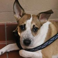 Adopt A Pet :: Merlot - Daytona Beach, FL