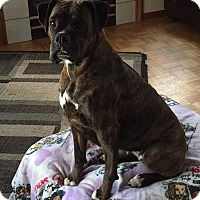 Adopt A Pet :: In Foster - Cola - Waterford, MI
