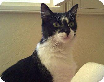 Domestic Mediumhair Cat for adoption in Brea, California - DAISY